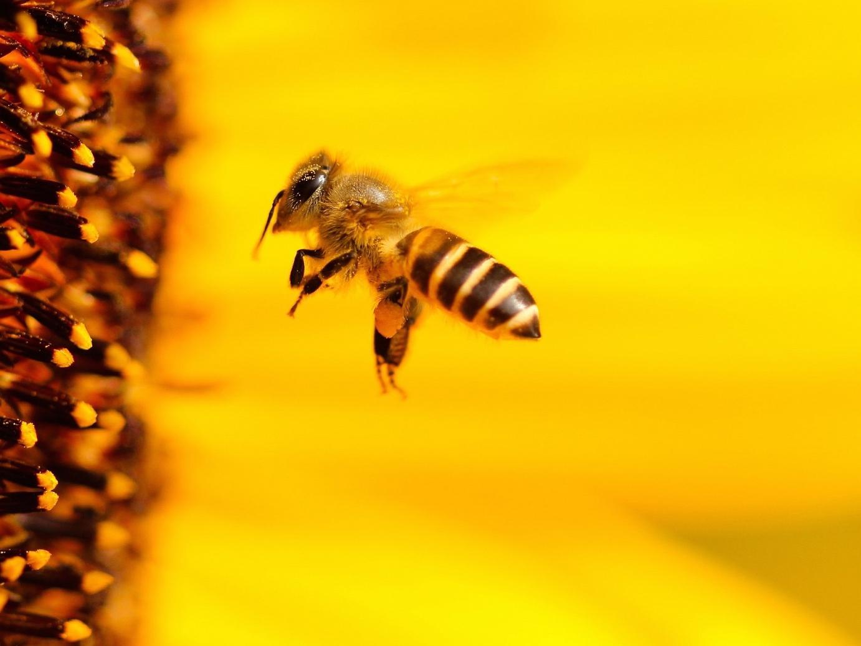 """Volksbegehren """"Rettet Die Bienen"""""""